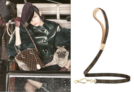 Walk Your Dog In Style