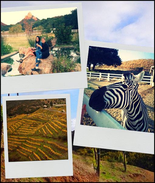 LA-Safaris1