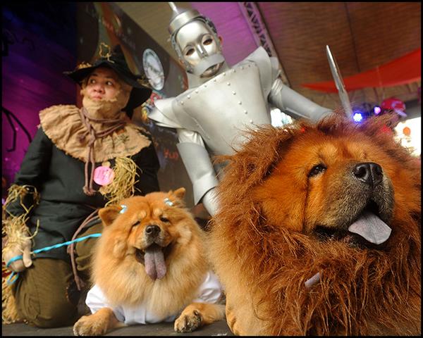 Doggie-Halloween-header
