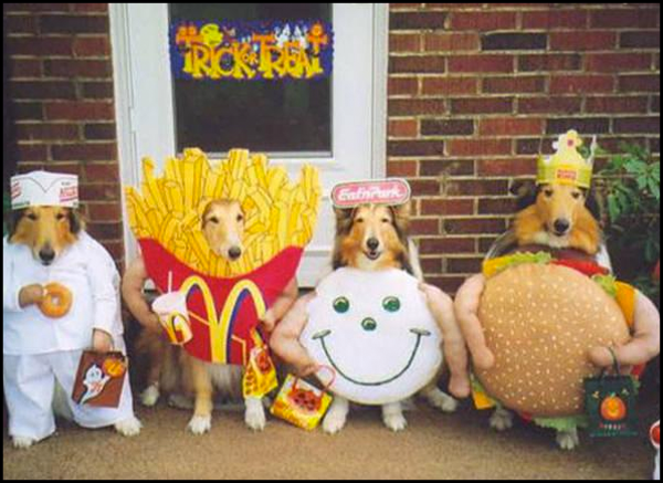 Doggone it! This Halloween We're Turning Our Pets Into PARTY ANIMALS!